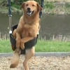 Dog Enjoys a Swing