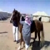 Why Fat Arabs Don\'t Ride Horses