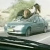 Horse Tramples Oncoming Car