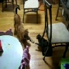 Puppie Vs Kitten - The Stand Off